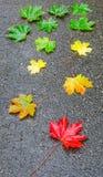 Foglio di autunno sulla via Fotografie Stock