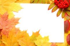 Foglio di caduta di autunno Fotografia Stock Libera da Diritti