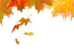 foglio di caduta di autunno Immagine Stock Libera da Diritti