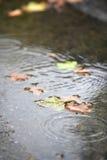 Foglio di caduta sulla terra dopo la pioggia Fotografie Stock