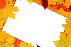 Foglio di carta bianco ed i fogli di autunno Fotografie Stock Libere da Diritti