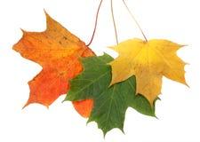 Foglio di colore di autunno Immagini Stock Libere da Diritti