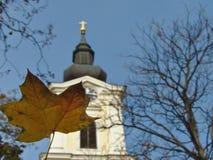 Foglio di galleggiamento di autunno fotografie stock