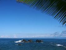 Foglio di Palmtree con seaview e le rocce Immagine Stock Libera da Diritti