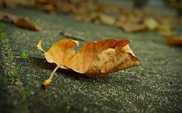 foglio digitale di caduta della priorità bassa di autunno di arte Fotografie Stock