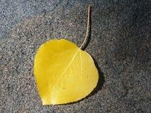 Foglio dorato dell'Aspen Fotografie Stock