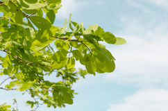 Foglio e cielo verdi Fotografie Stock