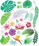 Foglio e fiori tropicali Fotografia Stock