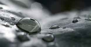Foglio e gocce di pioggia Fotografia Stock