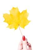 Foglio e mano di autunno Fotografie Stock Libere da Diritti