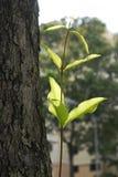 Foglio ed alberi Immagini Stock Libere da Diritti