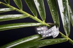 Foglio ed anello verdi Immagine Stock