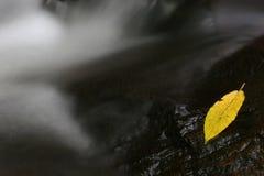 Foglio giallo fotografia stock