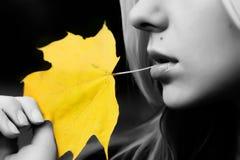 Foglio giallo Fotografie Stock
