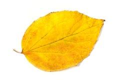 Foglio giallo di autunno Fotografie Stock Libere da Diritti