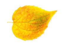 Foglio giallo di autunno Fotografie Stock