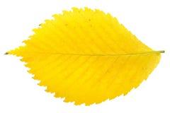 Foglio giallo di autunno Fotografia Stock Libera da Diritti