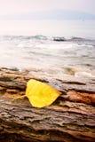 Foglio giallo sulla roccia Immagine Stock Libera da Diritti