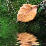 Foglio guasto su muschio verde vicino ad acqua immagine stock