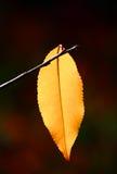 Foglio Multi-coloured in autunno immagine stock