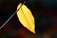 Foglio Multi-coloured in autunno fotografie stock libere da diritti