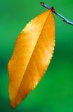 Foglio Multi-coloured in autunno fotografia stock libera da diritti