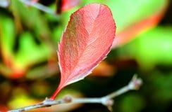 Foglio Multi-coloured in autunno immagini stock