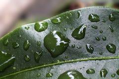 Foglio in pioggia Immagine Stock Libera da Diritti