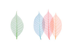 Foglio reale con la vena del particolare ed i vari colori Fotografia Stock Libera da Diritti