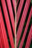 Foglio rosso Fotografie Stock