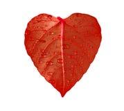 Foglio rosso del cuore Fotografia Stock Libera da Diritti
