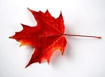 Foglio rosso di autunno Fotografia Stock Libera da Diritti