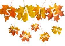 Foglio rosso di autunno Fotografie Stock