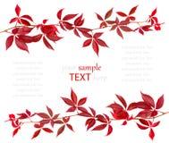 Foglio rosso di autunno Fotografie Stock Libere da Diritti