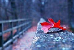 Foglio rosso di autunno sul vecchio ponticello di legno Fotografia Stock