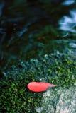 Foglio rosso su muschio verde Immagine Stock