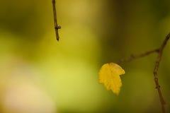 Foglio su un albero Fotografia Stock