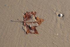 Foglio sulla sabbia Fotografia Stock Libera da Diritti