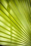 Foglio tropicale Fotografie Stock Libere da Diritti