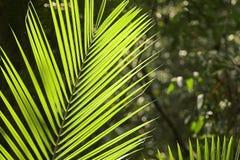 Foglio tropicale Fotografia Stock