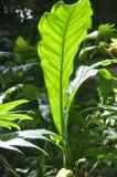 Foglio verde. fotografia stock libera da diritti