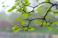 Foglio verde fotografia stock libera da diritti