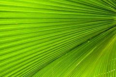 foglio verde Fotografie Stock