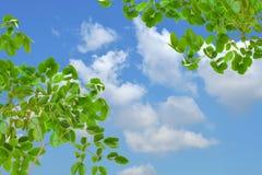 foglio verde immagine stock