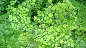 foglio verde Immagini Stock