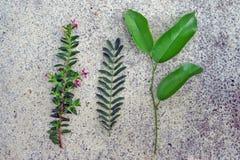 foglio verde fotografie stock libere da diritti