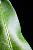 Foglio verde astratto Fotografia Stock Libera da Diritti