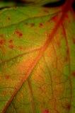 Foglio verde astratto immagini stock libere da diritti