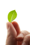 Foglio verde in barrette Fotografia Stock Libera da Diritti