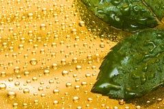 Foglio verde con le gocce fotografia stock